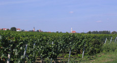 Holidays in Burgenland with English guided tours